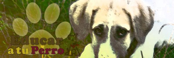 La alergia en perros