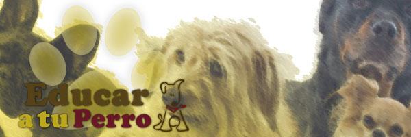 Curiosidades y Blog educa-a-tu-perro.com