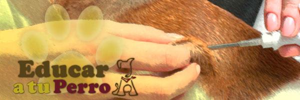 Diabetes en el perro