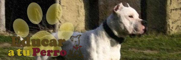 perros peligrosos Dogo-argentino