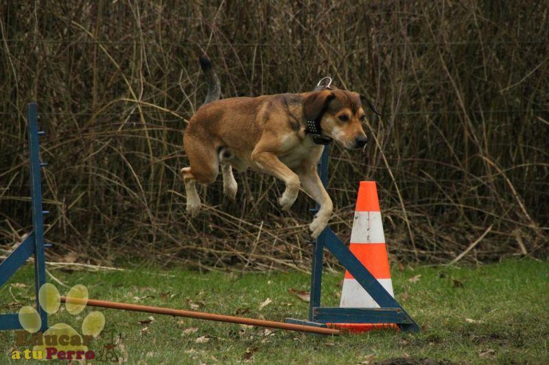 Consejos para el entrenamiento del perro