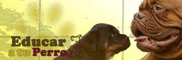 Idioma de perros ¿Cómo se comunican entre si?