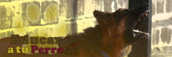 Ladridos de perro