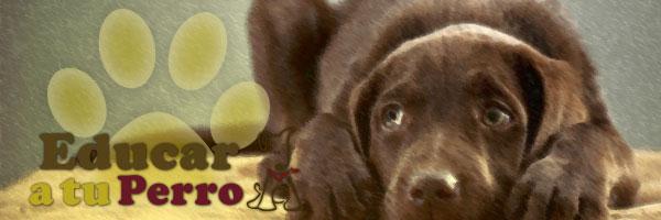 Cómo controlar el miedo en el perro