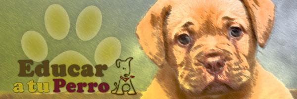 Consejos para un perro sano