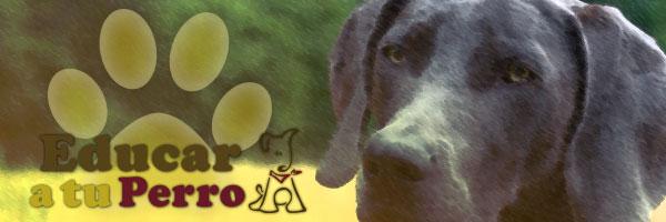 Señales de mano para un perro de caza